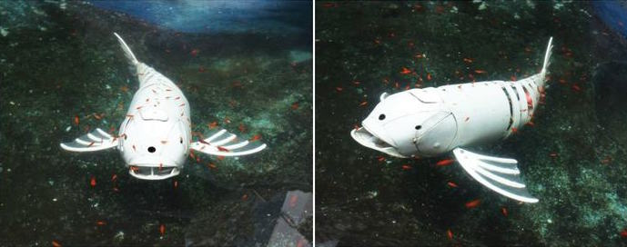 Robotic fish made of pvc pipes embedded lab